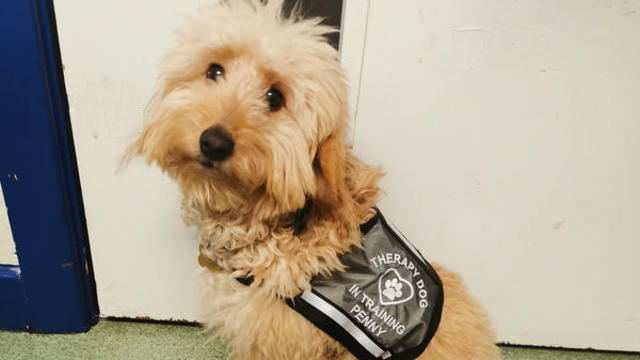 A therapy support dog
